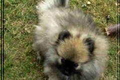 Dies ist Amadeus!